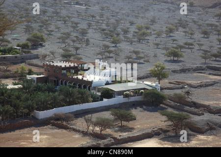 Palmenhain in der Bucht von Bukha, in der omanischen Enklave Musandam, Oman - Stock Photo