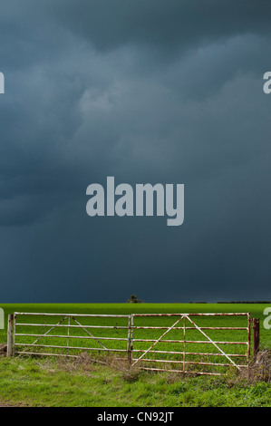 Stormy rain clouds over a sun lit wheat field in the English countryside - Stock Photo