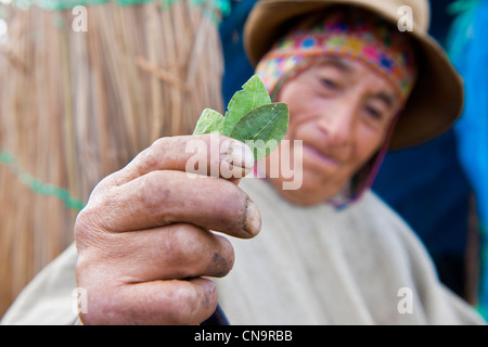 Peru, Cuzco province, Huasao, listed as mystic touristic village, shaman (curandero) exhibiting coca leaves - Stock Photo
