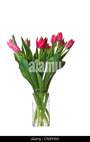 Pink and Red Tulips in glass vase on pure white background - Stock Photo