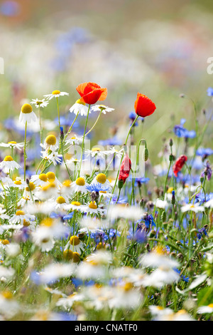 abundance of blooming wild flowers on the meadow at springtime - Stock Photo