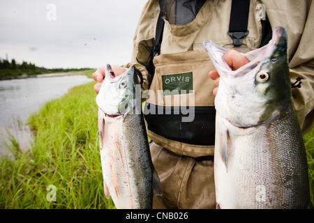 Fly fisherman holds up two Sockeye salmon on the Mulchatna River in the Bristol Bay area, Southwest Alaska, Summer - Stock Photo