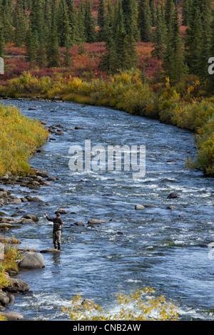 Fly fisherman fishes for grayling in Brushkana creek along the Denali Highway, Interior, Alaska, Autumn - Stock Photo