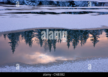 View of snowy forest reflected in open water of Mendenhall River, Tongass National Forest, Southeast Alaska, Winter - Stock Photo