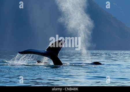 A Humpback Whale lifts its flukes as it dives down into Stephens Passage, Admiralty Island, Inside Passage, Alaska, - Stock Photo