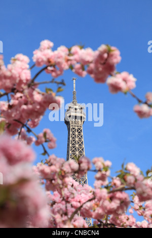 Detail of the top of The Eiffel Tour seen through branches of blossoming tree in spring. - Stock Photo