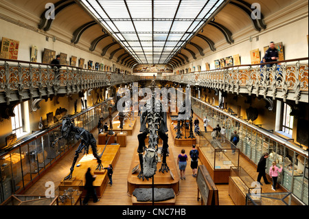 France, Paris, the Jardin des Plantes (Plants Gardens), comparative anatomy and palaeontology Galeries - Stock Photo
