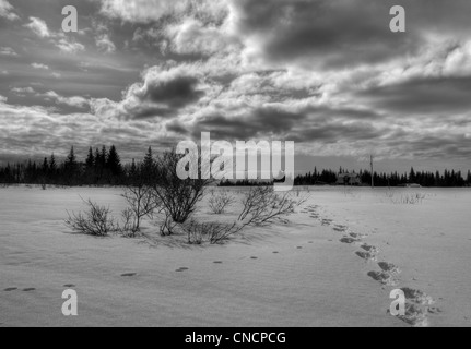 Snow shoe tracks in rural Alaska heading off to a homestead with dramatic clouds in black and white. - Stock Photo