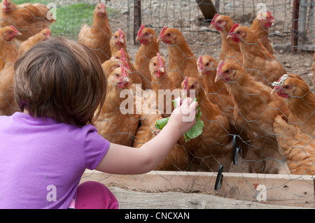 Young girl feeds radish leaves to chickens on a farm in Palmer, Mat-Su Valley, Southcentral Alaska, Summer - Stock Photo