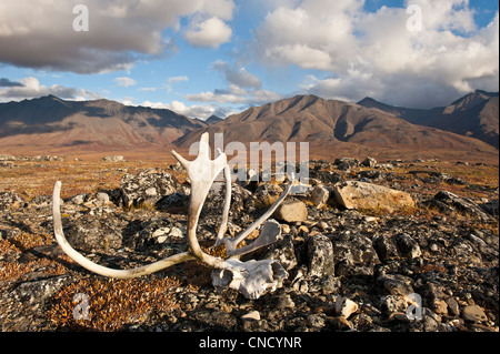 Scenic view of John River valley with caribou antlers in the foreground, Gates of the Arctic National Park & Preserve, - Stock Photo