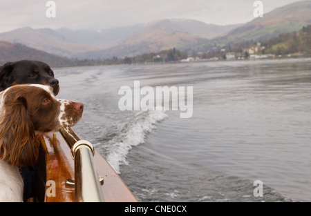 two dogs on a boat In the middle of the Lake, Lake Windermere, The Lake District, UK - Stock Photo
