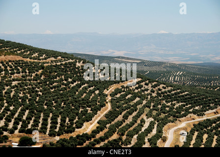 View of olive groves and countryside seen from the Plaza Santa Lucia, Ubeda, Jaen Province, Andalucia, Spain, Western - Stock Photo