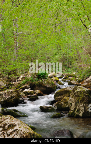 Wild stream between stones in spring forest. National park Tara - Stock Photo