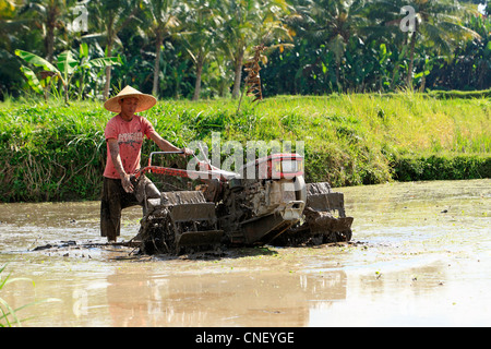 Balinese farmer using a tractor to plough his flooded rice paddy, near Ubud, Bali, Indonesia. - Stock Photo
