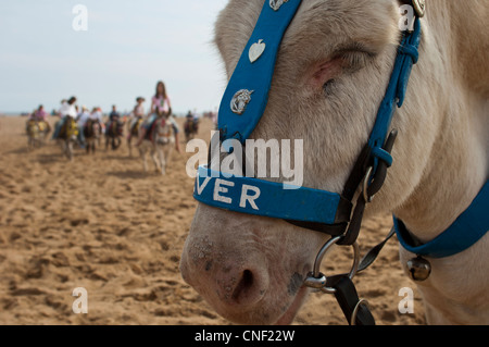 Seaside donkey rides on the beach at Skegness, Lincolnshire. England UK - Stock Photo