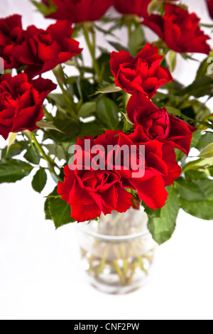 Close up of red roses in vase - Stock Photo