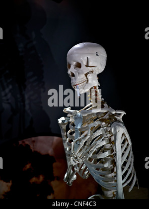 Human skeleton with a cigarette. Concept of the dangers of smoking. - Stock Photo