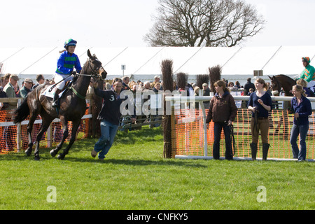 A  Thoroughbred horse Equus ferus caballus on his way to the start of a race - Stock Photo