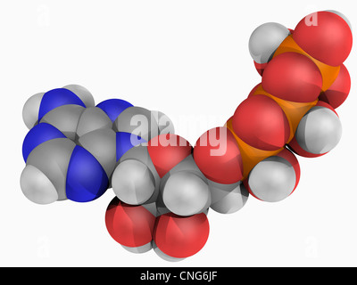 Adenosine triphosphate molecule - Stock Photo