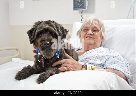 Dog Visiting Old Woman Patient In Hospital As Part Of A Pet Therapy Program, Philadelphia USA - Stock Photo