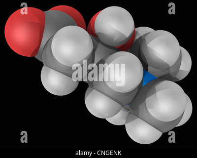 Carnitine molecule - Stock Photo