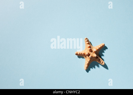 Starfish on turquoise background - Stock Photo