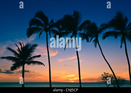Palm trees at Sunset, Maui, Hawaii - Stock Photo