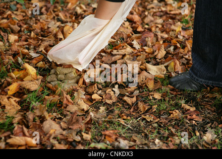 Domestic Dog, muck picked up by owner using plastic bag in urban park, Gosport, Hampshire, England, october - Stock Photo