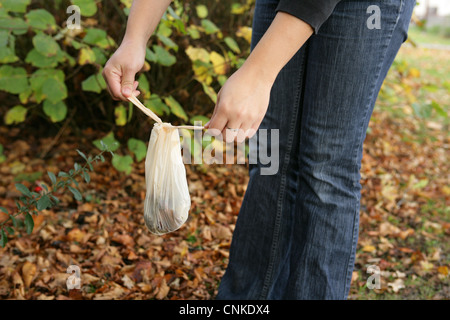 Domestic Dog, muck in plastic bag, picked up by owner in urban park, Gosport, Hampshire, England, october - Stock Photo
