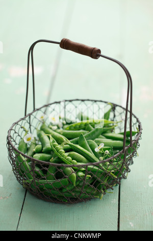 A basket filled with English peas. - Stock Photo