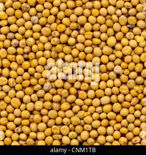 White mustard seeds , Senfkörner, granum sinapis, Samenkörner des weißen Senf - Stock Photo