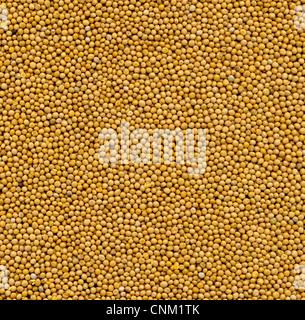 White mustard seeds granum sinapis  foodstill - Stock Photo