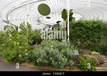 inside Kibble Palace, Glasgow Botanical Gardens, Scotland ...