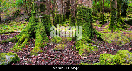 Ireland Forest - Stock Photo