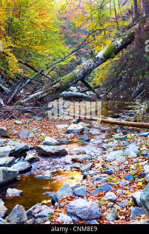 Landscape with a creek, fallen trees and forest in the mountains - Stock Photo