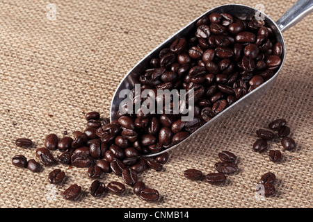Photo of fresh roasted arabica and robusta coffee beans in a metal scoop on a hesian sack background. - Stock Photo