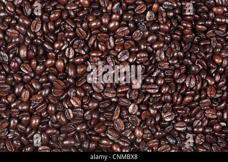 Photo of fresh roasted arabica and robusta coffee beans suitable for use as a background.