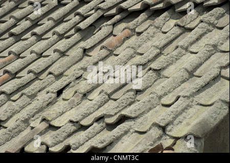 Roof tiles covered ash recent volcanic eruption near Jogyakarta Mount Merapi Central Java Indonesia november 2010 - Stock Photo