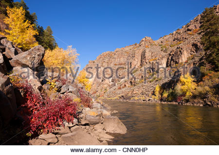 The Gunnison River in Colorado flows into a narrow gorge lined by trees displaying their fall colors. - Stock Photo