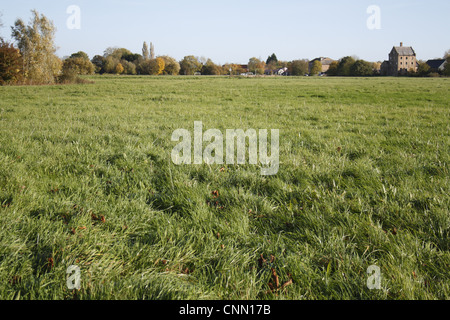 View of commonland reserve, The Carnser, Mellis Common, Mellis, Suffolk, England, october - Stock Photo