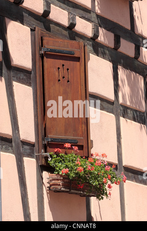 geraniums in a window box medieval half timbered house Ribeauville Alsace France - Stock Photo