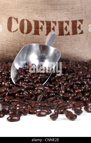 Photo of fresh roasted coffee beans with a scoop and hessian sack. - Stock Photo