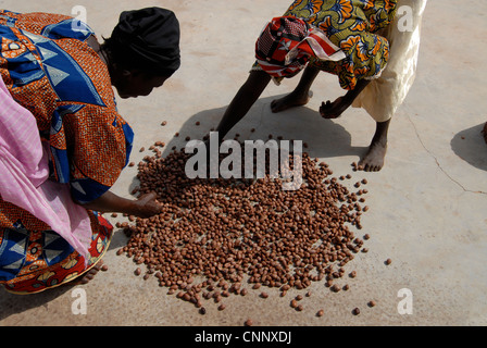 Burkina Faso , women produce fair trade shea butter from Shea nuts , shea butter is used as cooking oil or for cosmetics - Stock Photo