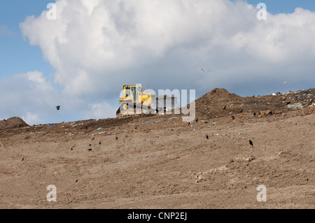 Caterpillar D6N compaction machine working on council rubbish tip scavenging crows near Ellesmere Cheshire England - Stock Photo