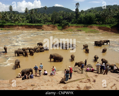 Sri Lanka Pinnawala - Tourists and elephants at the elephant bathing place in the Mahaweli  river,  Pinnawela, Sri - Stock Photo