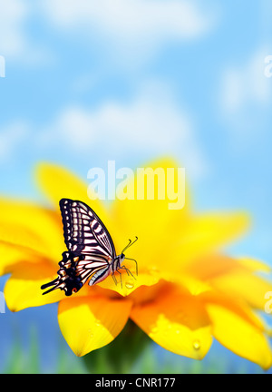 Monarch butterfly on yellow flower, natural background, selective focus - Stock Photo