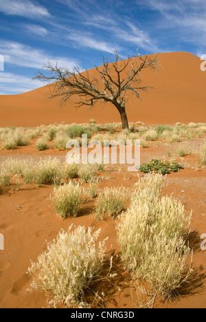 namib desert; dune 45 near Sesriem, Namibia - Stock Photo
