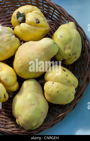 Quinces in basket - Stock Photo
