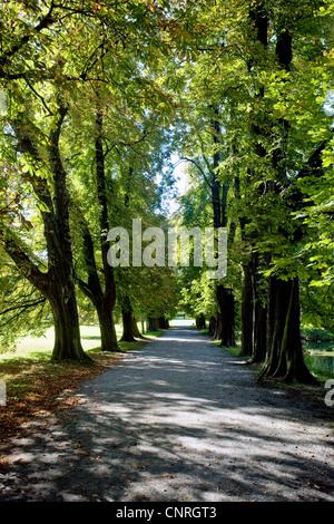 avenue in the park of Herten castle, Germany, North Rhine-Westphalia, Ruhr Area, Herten - Stock Photo
