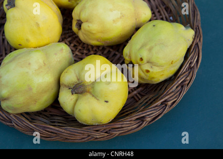 Quinces in basket, cropped - Stock Photo